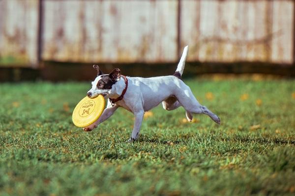 empecher son chien de creuser